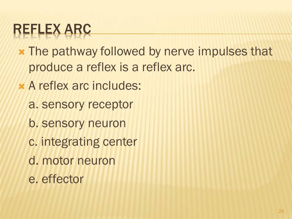  The pathway followed by nerve impulses that produce a reflex is a reflex arc.