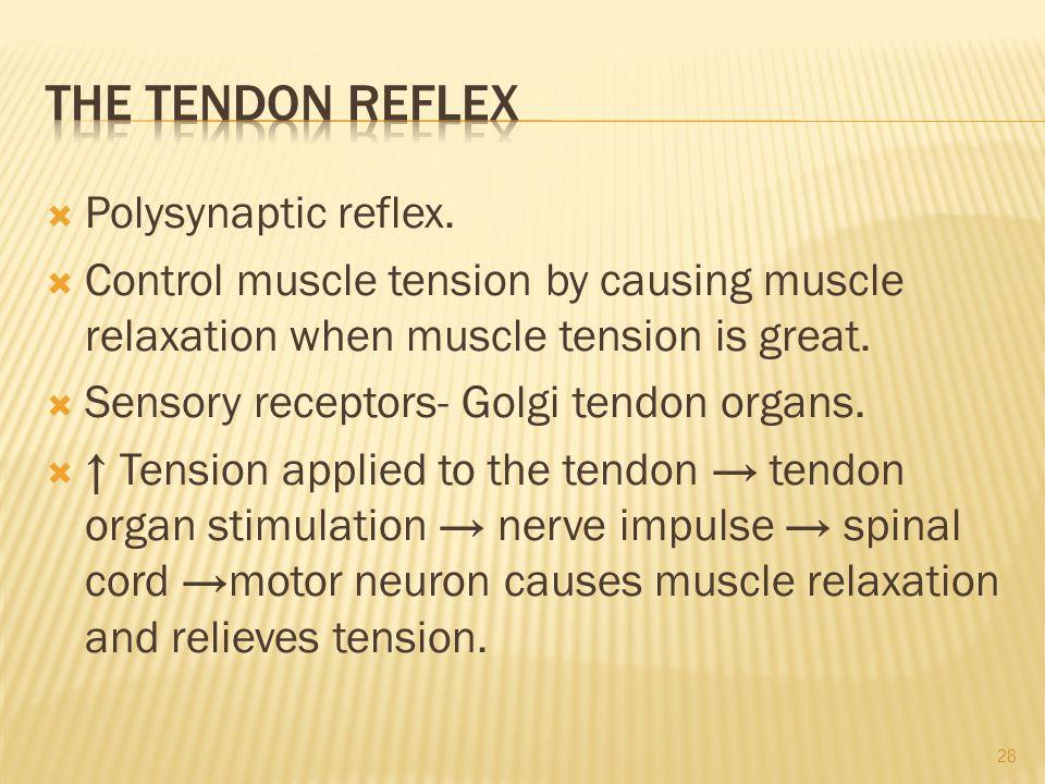  Polysynaptic reflex.
