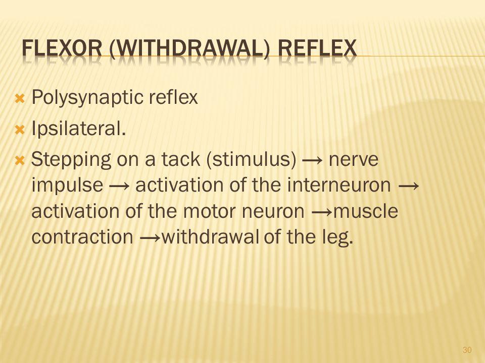  Polysynaptic reflex  Ipsilateral.