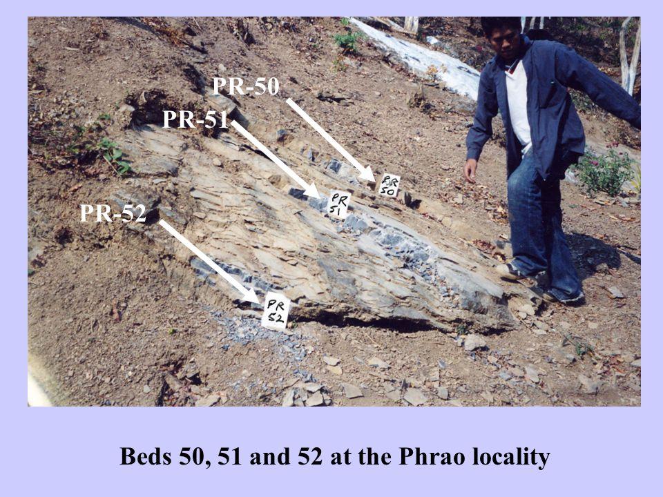 Bed PR-51. Neospathodus ex gr. chii