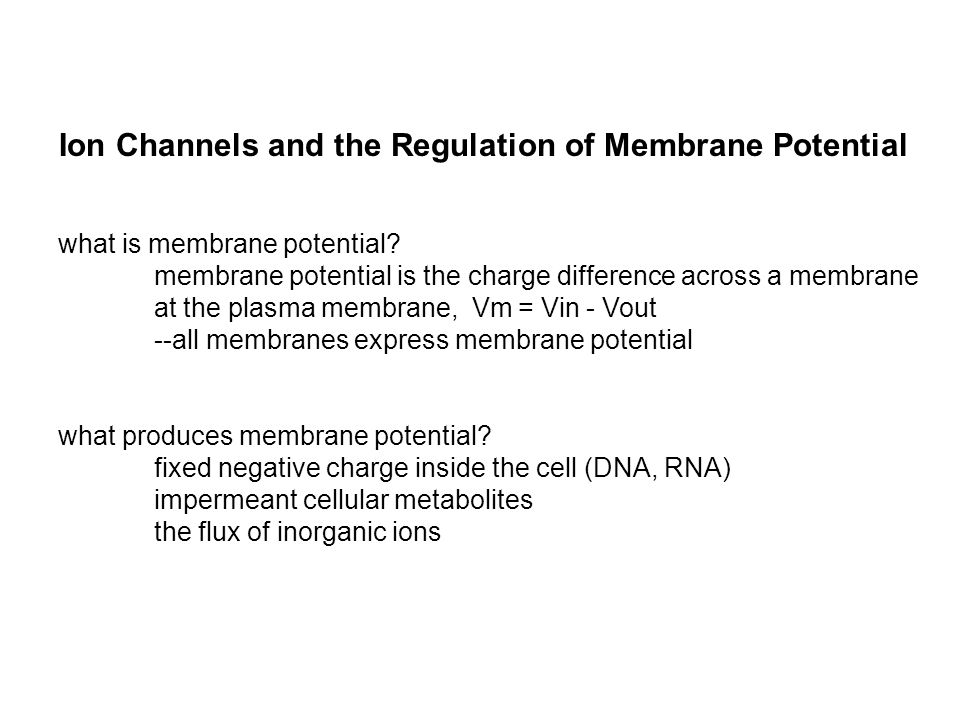 KCl --no membrane potential KCl K+K+ K+K+ Cl - - + http://nerve.bsd.uchicago.edu/ key features: very few ions needed to generate membrane potential (fast, cheap) does not change bulk concentrations system comes to rest at a new equilibrium membrane potential depends on ionic gradients --membrane potential