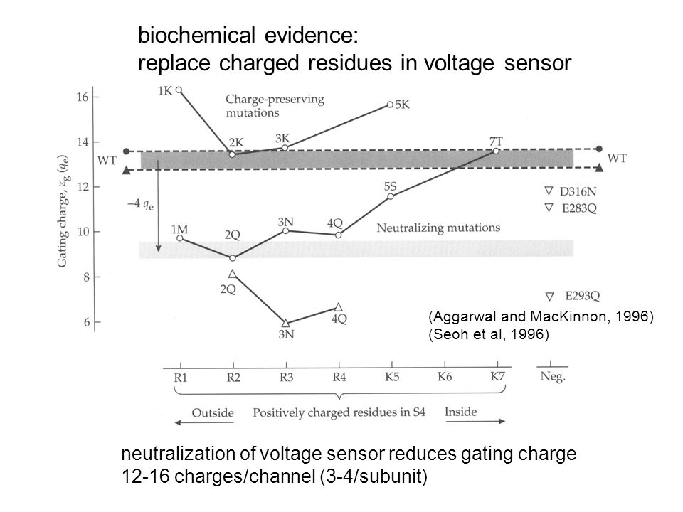 neutralization of voltage sensor reduces gating charge 12-16 charges/channel (3-4/subunit) (Aggarwal and MacKinnon, 1996) (Seoh et al, 1996) biochemic
