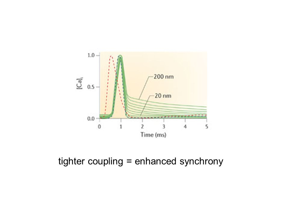 tighter coupling = enhanced synchrony