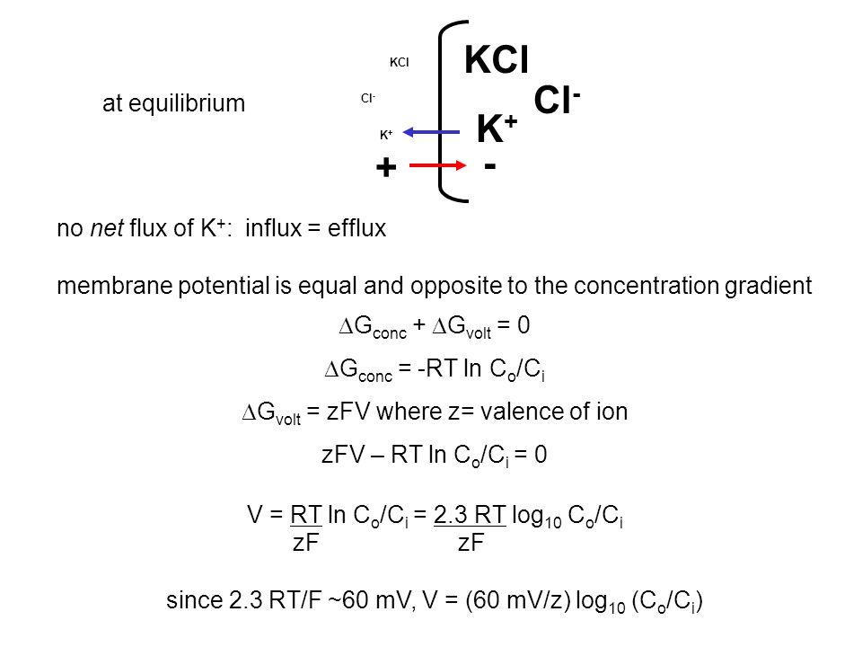 (Tao et al., 2009) Rb + (~K + )Sr ++ (~Mg ++ ) K + cannot displace Mg ++, only with K + efflux --rectification