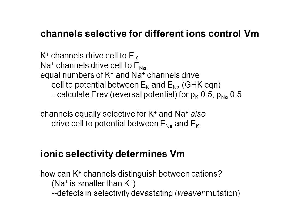 channels selective for different ions control Vm K + channels drive cell to E K Na + channels drive cell to E Na equal numbers of K + and Na + channel