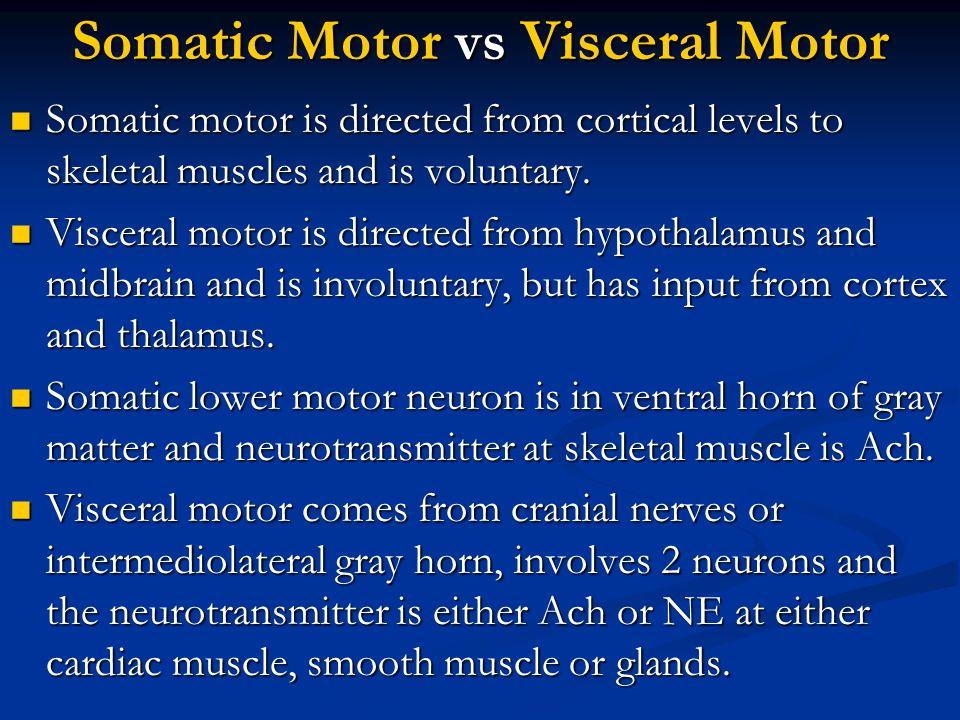 Somatic Motor vs Visceral Motor Somatic motor is directed from cortical levels to skeletal muscles and is voluntary. Somatic motor is directed from co