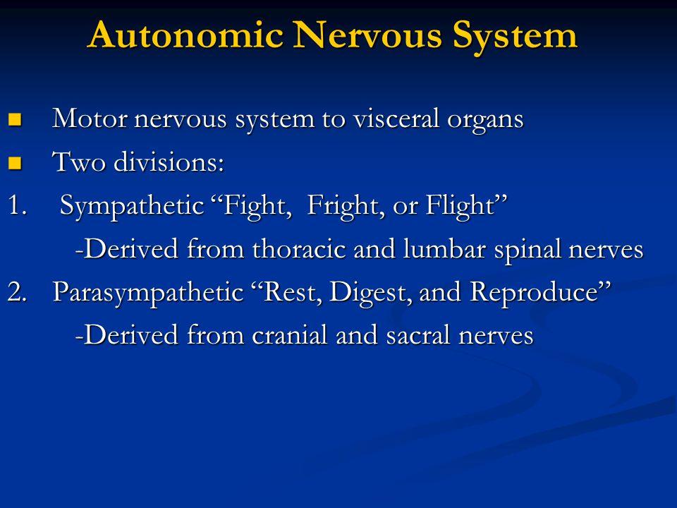 Autonomic Nervous System Motor nervous system to visceral organs Motor nervous system to visceral organs Two divisions: Two divisions: 1. Sympathetic