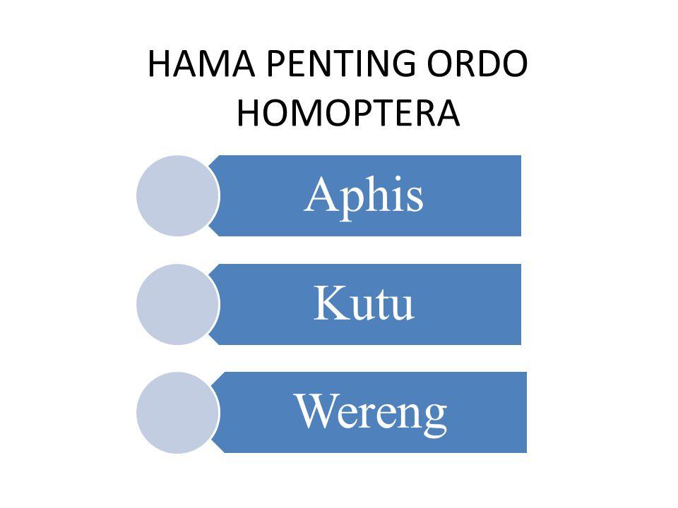 HAMA PENTING ORDO HOMOPTERA Aphis Kutu Wereng