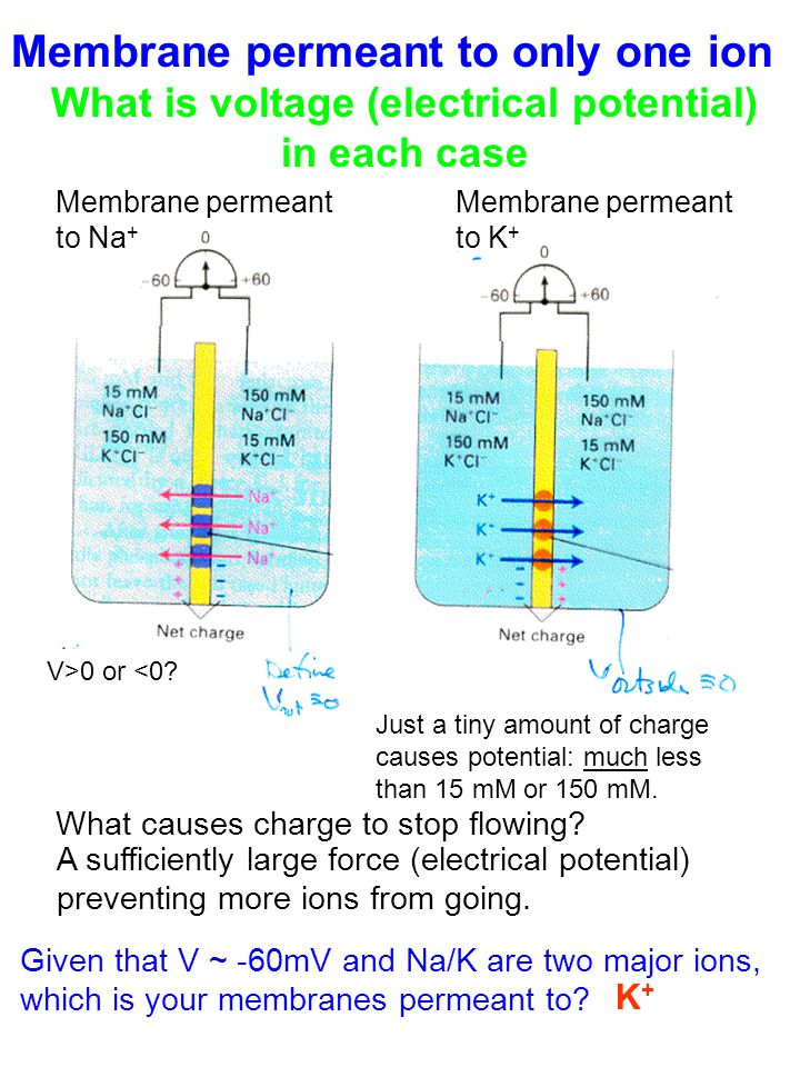 V>0 or <0. What causes charge to stop flowing.