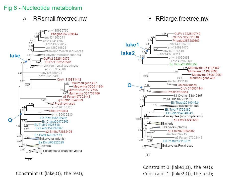 RRlarge.freetree.nw RRsmall.freetree.nw Fig 6 - Nucleotide metabolism env135995750 Phaglob357289644 env134963011 env143414687 env143779819 env136210698 environmental sequences OLPV2 322510876 OLPV1 322510501 environmental sequences env135919586 env136858401 env135287498 CroV 310831442 Moumou gene 497 Megavirus 350611804 Mimivirus 311977695 Mamavirus 351737466 q3 Felsp197322443 q3 Ectsi13242599 Prasinoviruses env136160125 Chloroviruses env135039280 Ec Plavi156102402 Ec Crypa66475262 Ek Trybr74025548 Ek Leibr154337607 q2 Emihu73852496 Ec Parte145537171 Eukaryotes (plants) Ea Dicdi66822029 Bacteria Eukaryotes/Eukaryotic virues 0.80 0.99 0.76 0.95 0.80 0.65 0.94 0.77 0.79 0.94 1.00 0.96 1.00 0.63 0.82 0.79 0.94 0.98 1.00 0.67 0.87 1.00 0.99 0.95 0.99 0.71 0.69 0.62 0.84 0.98 0.99 0.67 0.81 1.00 0.2 AB lake Q lake1 Q lake2 Constraint 0: (lake,Q), the rest); Constraint 0: (lake1,Q), the rest); Constraint 1: (lake2,Q), the rest);