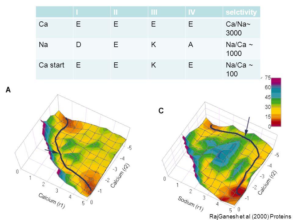 IIIIIIIVselctivity CaEEEECa/Na~ 3000 NaDEKANa/Ca ~ 1000 Ca startEEKENa/Ca ~ 100 RajGanesh et al (2000) Proteins