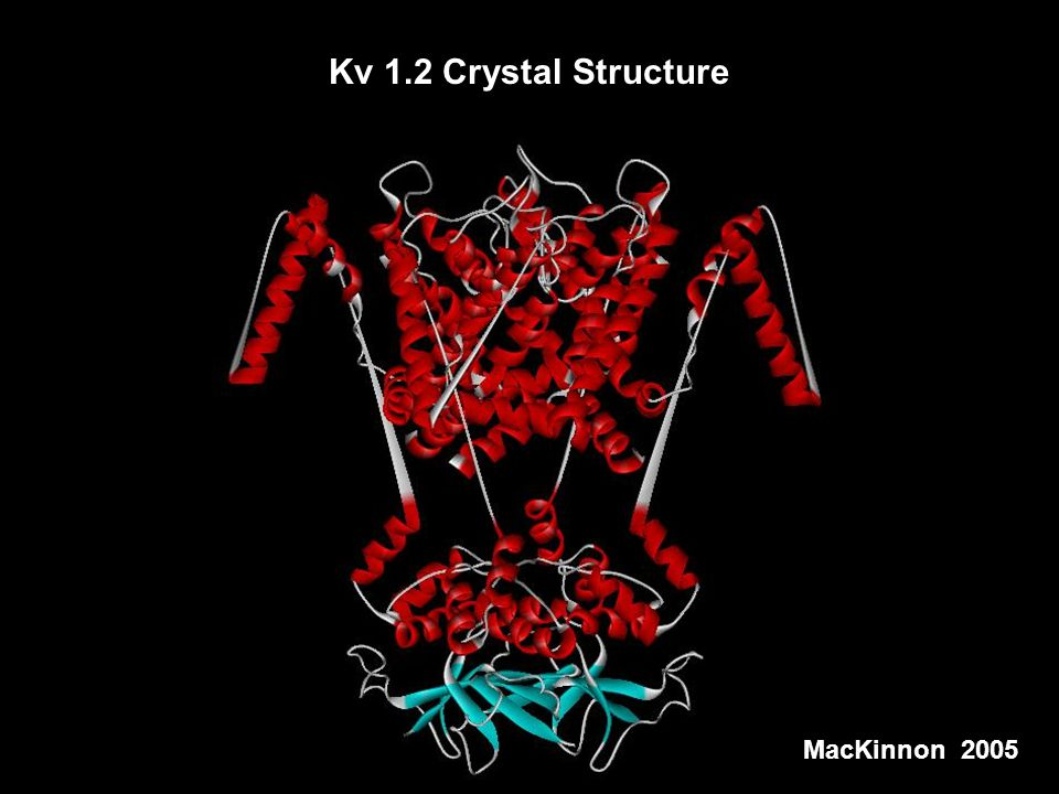 Kv 1.2 Crystal Structure MacKinnon,2005