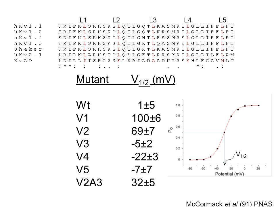 Phenylalanine mutations in hKv 1.4 Val/Ala mutations in Shaker McCormack et al., (1991) Judge et al., (2002) MutantV 1/2 (mV) Wt 1±5 V1100±6 V269±7 V3