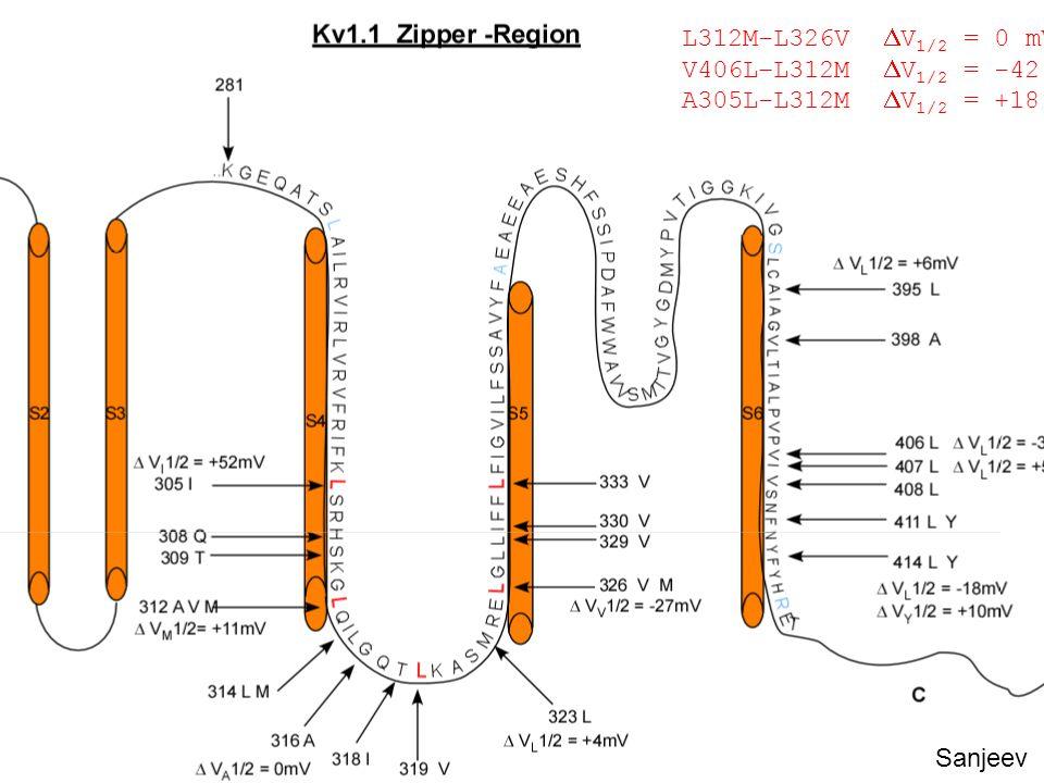 L312M-L326V  V 1/2 = 0 mV V406L–L312M  V 1/2 = -42 mV A305L-L312M  V 1/2 = +18 mV Sanjeev
