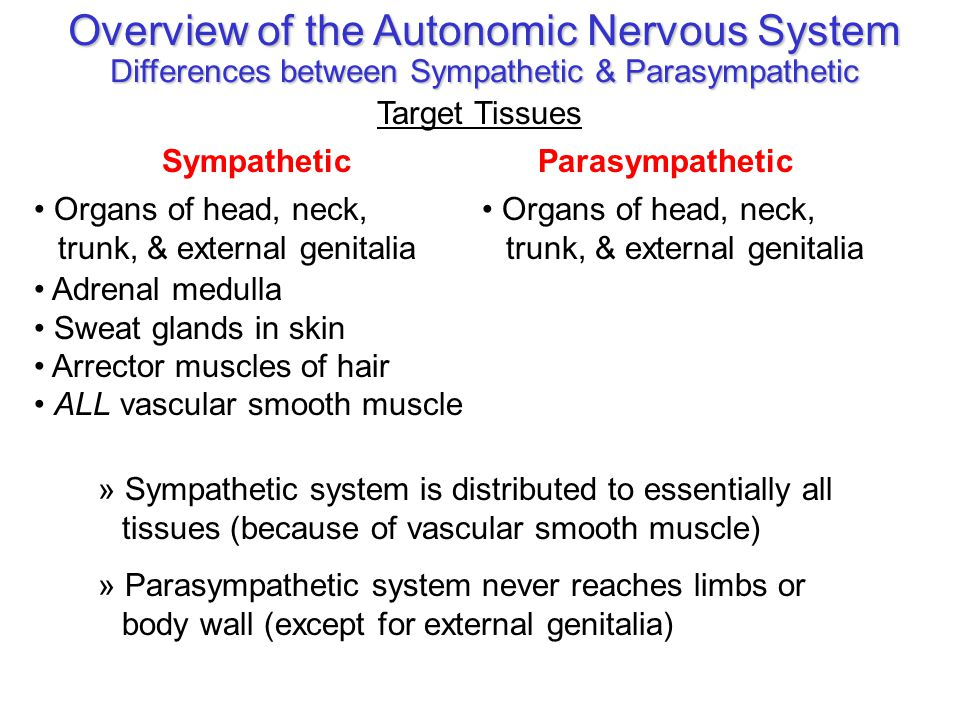Overview of the Autonomic Nervous System Differences between Sympathetic & Parasympathetic Target Tissues ParasympatheticSympathetic Organs of head, n