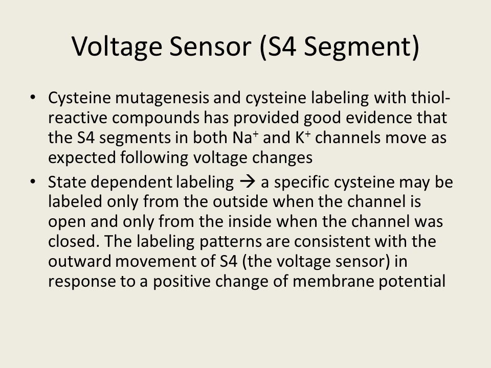 Voltage Sensor (S4 Segment) Cysteine mutagenesis and cysteine labeling with thiol- reactive compounds has provided good evidence that the S4 segments