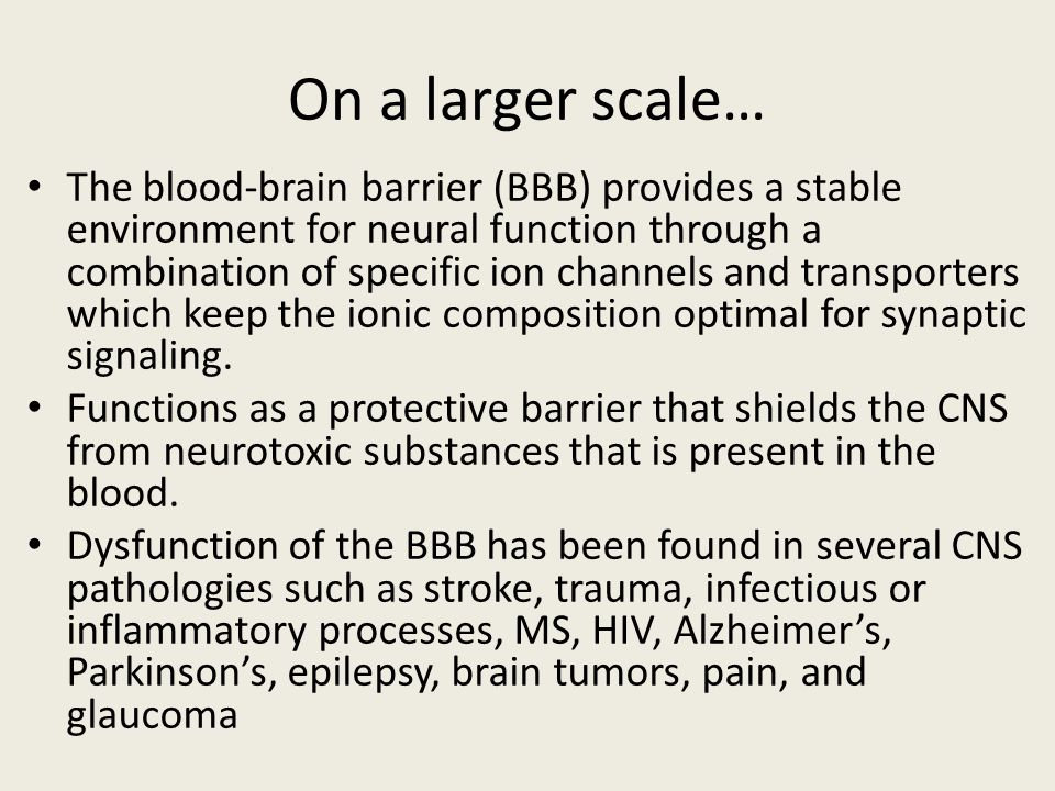 On a larger scale… The blood-brain barrier (BBB) provides a stable environment for neural function through a combination of specific ion channels and