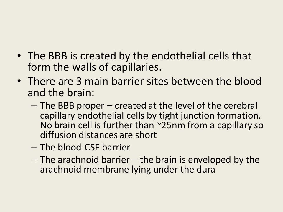 The BBB is created by the endothelial cells that form the walls of capillaries. There are 3 main barrier sites between the blood and the brain: – The