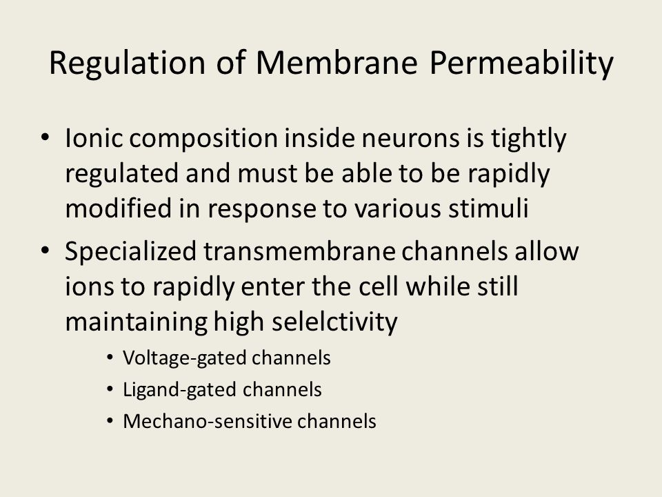 Regulation of Membrane Permeability Ionic composition inside neurons is tightly regulated and must be able to be rapidly modified in response to vario