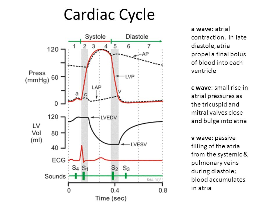 Cardiac Cycle a wave: atrial contraction. In late diastole, atria propel a final bolus of blood into each ventricle c wave: small rise in atrial press