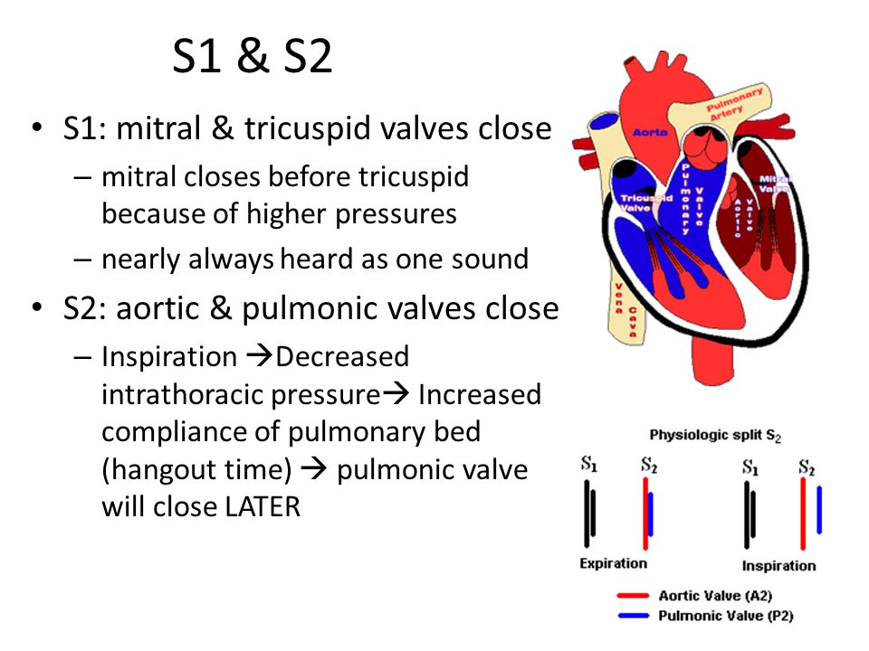 S1 & S2 S1: mitral & tricuspid valves close – mitral closes before tricuspid because of higher pressures – nearly always heard as one sound S2: aortic & pulmonic valves close – Inspiration  Decreased intrathoracic pressure  Increased compliance of pulmonary bed (hangout time)  pulmonic valve will close LATER