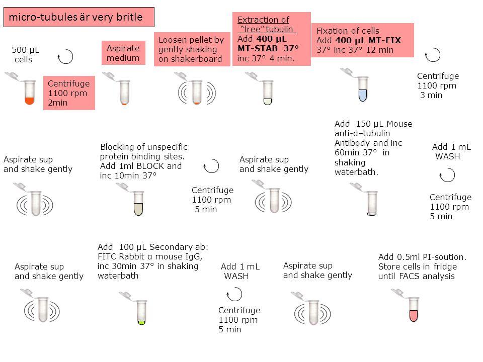 500 μL cells Aspirate medium Centrifuge 1100 rpm 2min Loosen pellet by gently shaking on shakerboard Add 150 μL Mouse anti-α–tubulin Antibody and inc