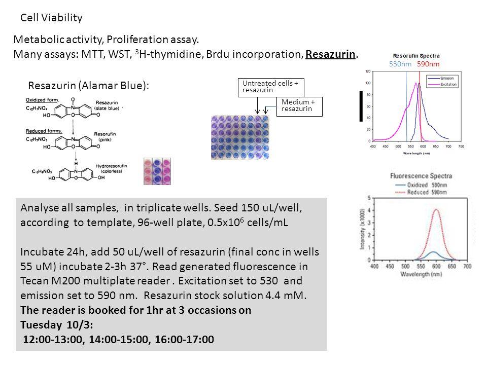Metabolic activity, Proliferation assay. Many assays: MTT, WST, 3 H-thymidine, Brdu incorporation, Resazurin. Analyse all samples, in triplicate wells