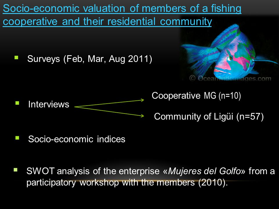 Socio-economic valuation of members of a fishing cooperative and their residential community  Surveys (Feb, Mar, Aug 2011)  Interviews  Socio-economic indices  SWOT analysis of the enterprise «Mujeres del Golfo» from a participatory workshop with the members (2010).