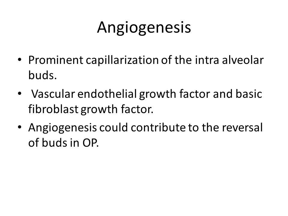 Angiogenesis Prominent capillarization of the intra alveolar buds. Vascular endothelial growth factor and basic fibroblast growth factor. Angiogenesis