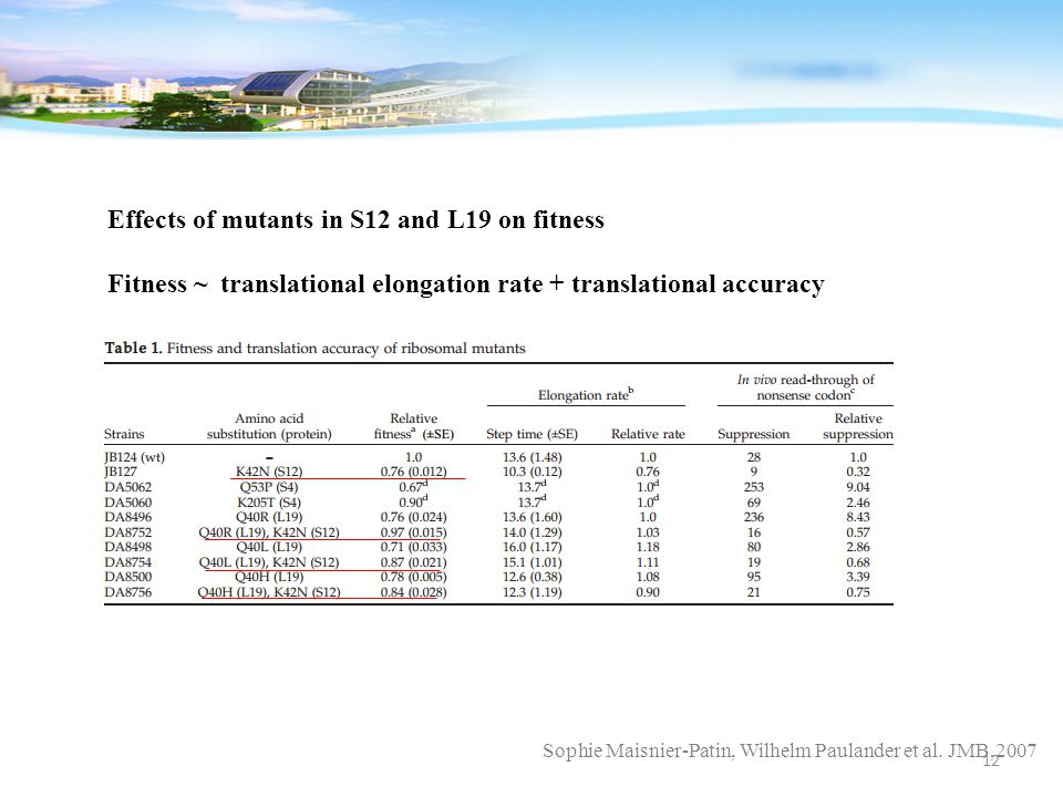 Sophie Maisnier-Patin, Wilhelm Paulander et al. JMB,2007 Effects of mutants in S12 and L19 on fitness Fitness ~ translational elongation rate + transl