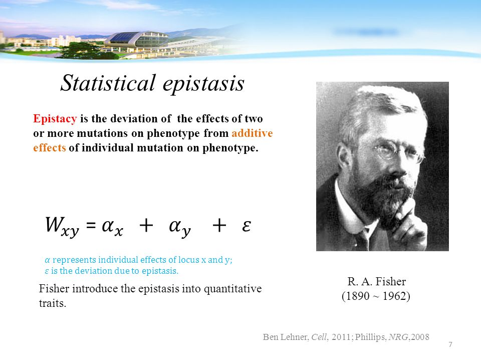 R. A. Fisher (1890 ~ 1962) Epistacy is the deviation of the effects of two or more mutations on phenotype from additive effects of individual mutation