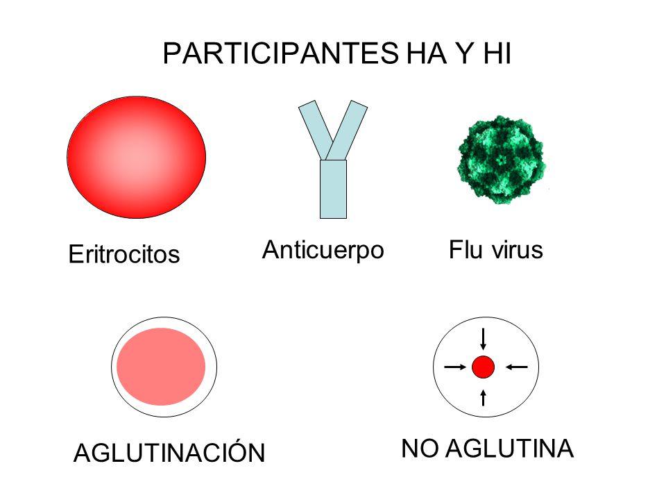 PARTICIPANTES HA Y HI Flu virus AGLUTINACIÓN NO AGLUTINA Anticuerpo Eritrocitos