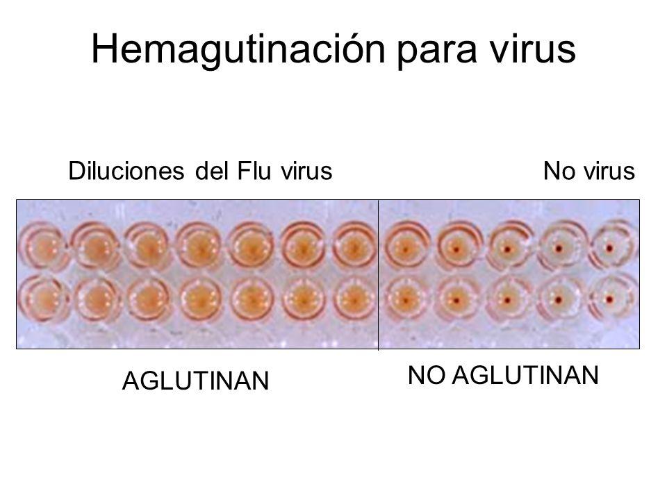 Hemagutinación para virus Diluciones del Flu virusNo virus AGLUTINAN NO AGLUTINAN