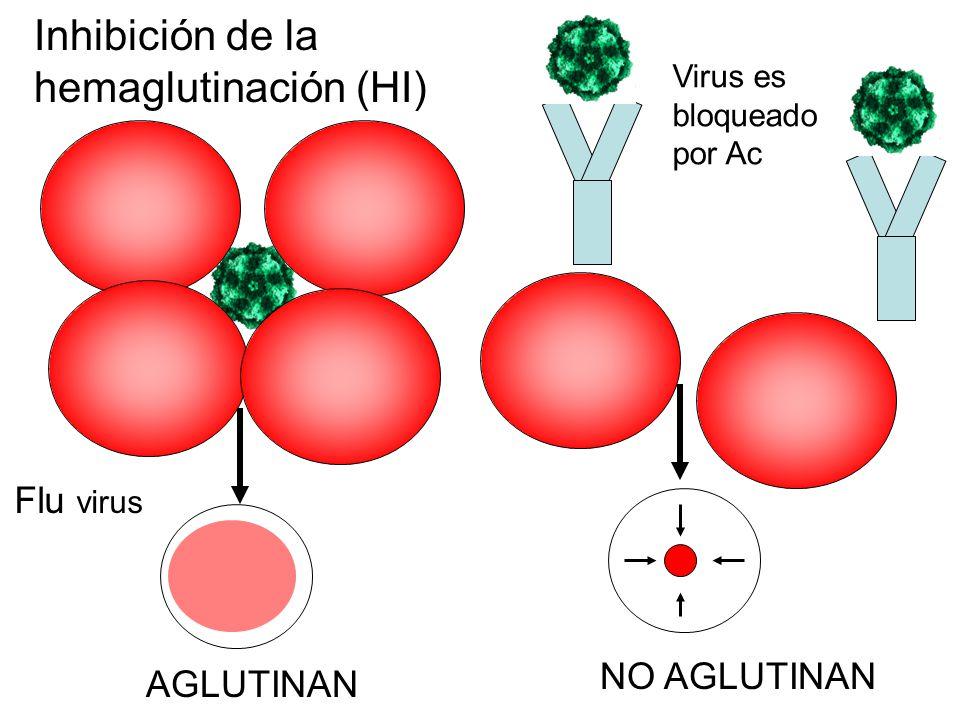 Inhibición de la hemaglutinación (HI) Flu virus Virus es bloqueado por Ac AGLUTINAN NO AGLUTINAN