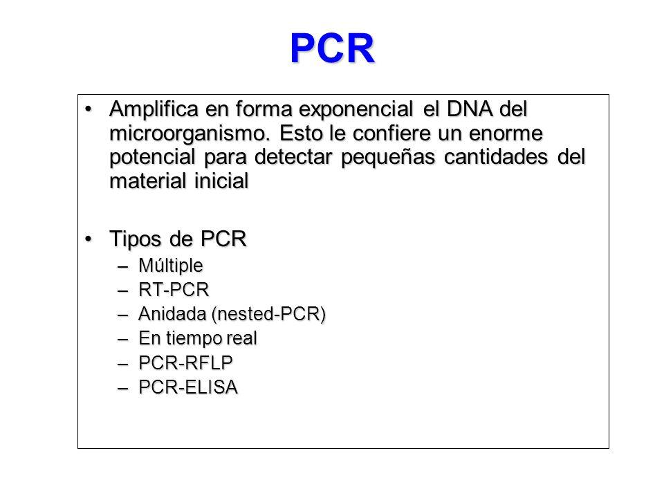 PCR Amplifica en forma exponencial el DNA del microorganismo.