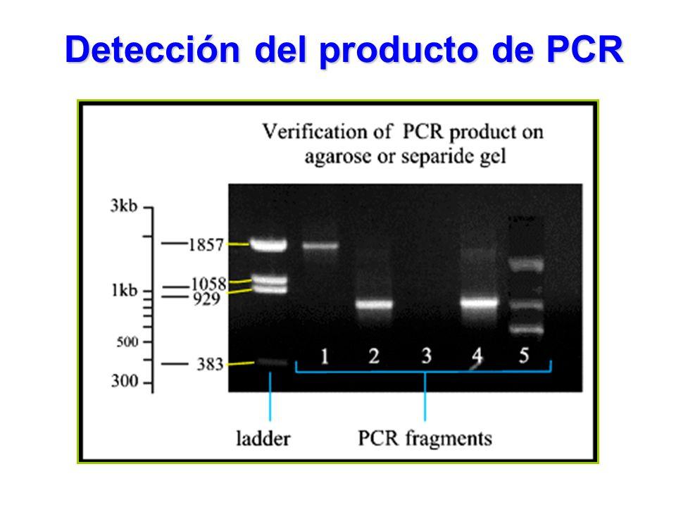 Detección del producto de PCR
