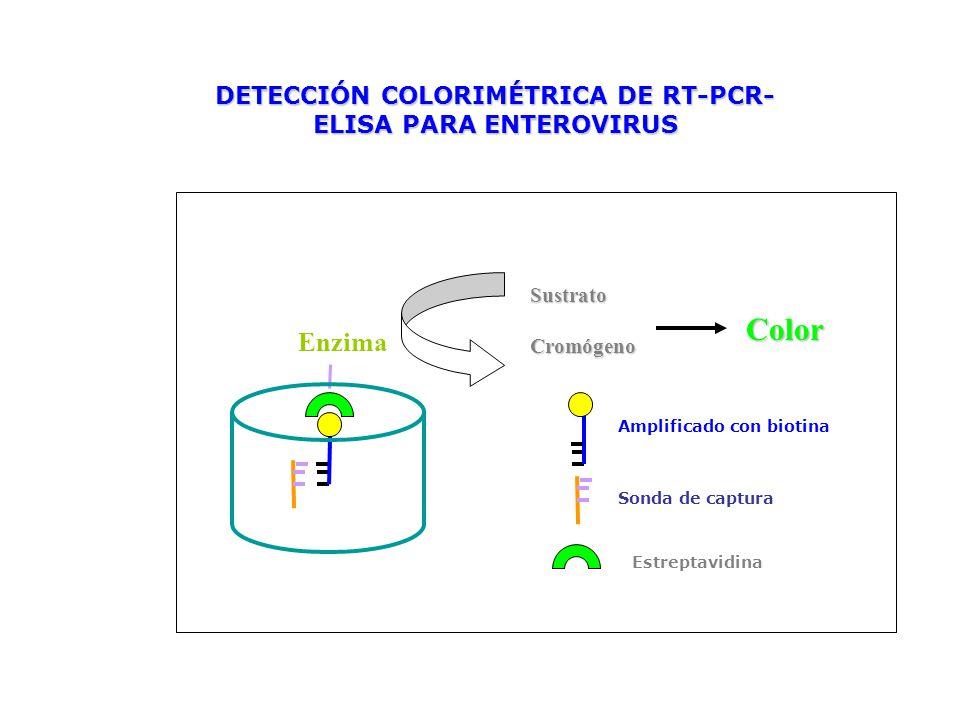 Enzima SustratoCromógeno Color DETECCIÓN COLORIMÉTRICA DE RT-PCR- ELISA PARA ENTEROVIRUS Amplificado con biotina Sonda de captura Estreptavidina
