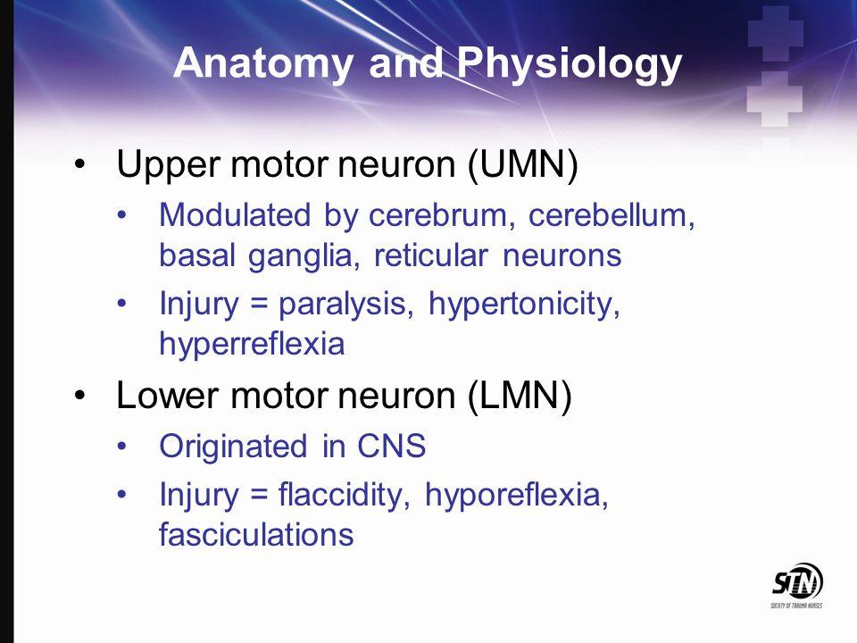 Anatomy and Physiology Upper motor neuron (UMN) Modulated by cerebrum, cerebellum, basal ganglia, reticular neurons Injury = paralysis, hypertonicity,