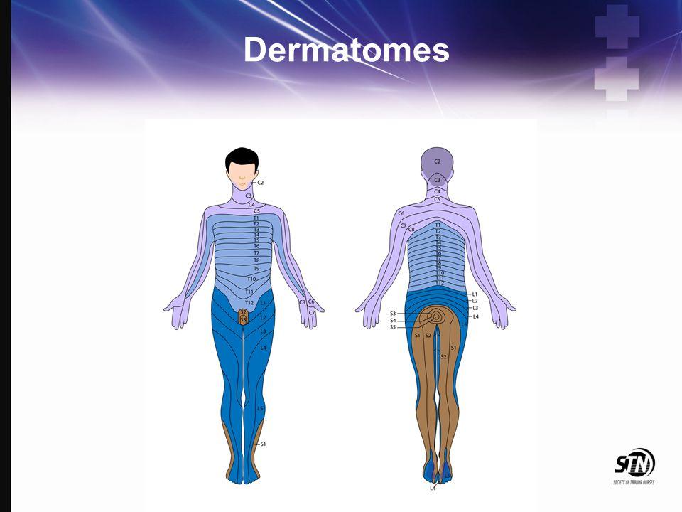 Dermatomes