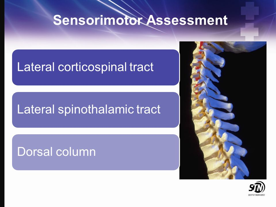 Sensorimotor Assessment Lateral corticospinal tractLateral spinothalamic tractDorsal column