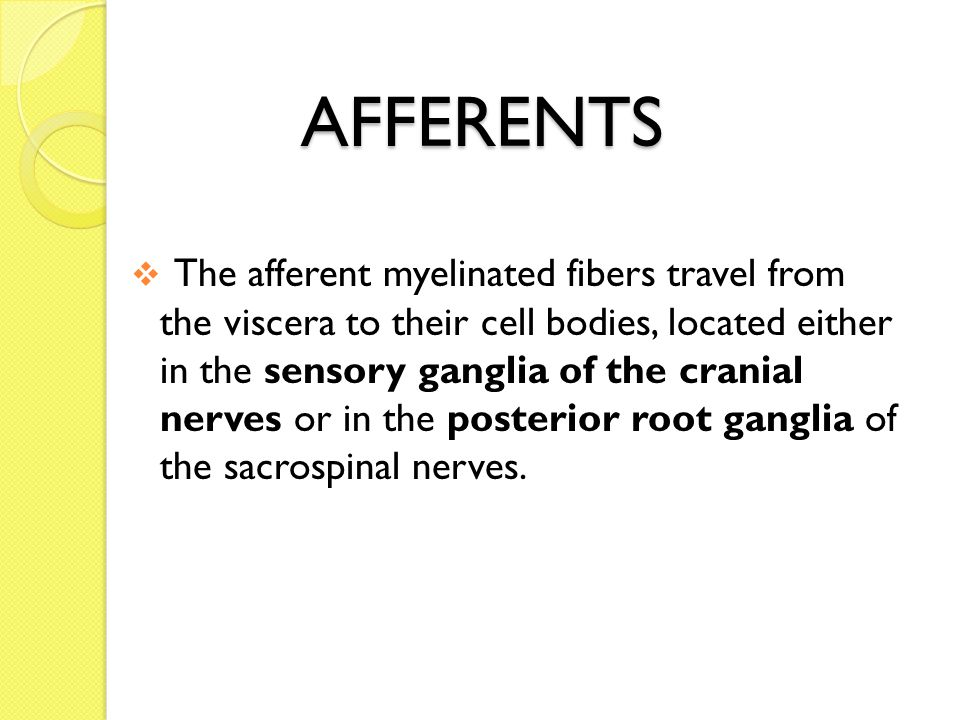 AFFERENTS  The afferent myelinated fibers travel from the viscera to their cell bodies, located either in the sensory ganglia of the cranial nerves or in the posterior root ganglia of the sacrospinal nerves.
