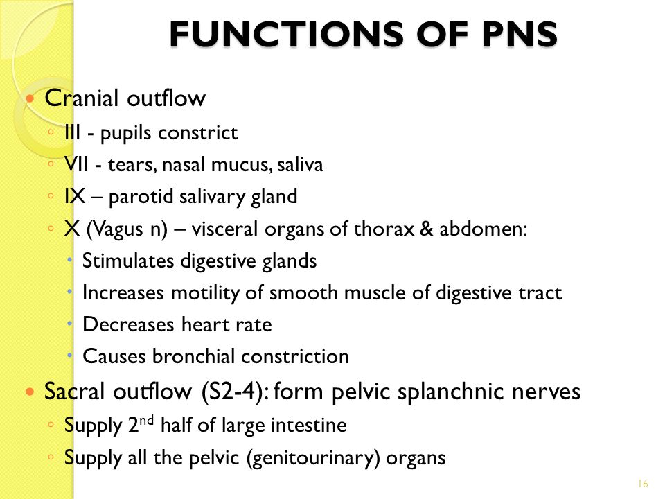 16 FUNCTIONS OF PNS Cranial outflow ◦ III - pupils constrict ◦ VII - tears, nasal mucus, saliva ◦ IX – parotid salivary gland ◦ X (Vagus n) – visceral organs of thorax & abdomen:  Stimulates digestive glands  Increases motility of smooth muscle of digestive tract  Decreases heart rate  Causes bronchial constriction Sacral outflow (S2-4): form pelvic splanchnic nerves ◦ Supply 2 nd half of large intestine ◦ Supply all the pelvic (genitourinary) organs