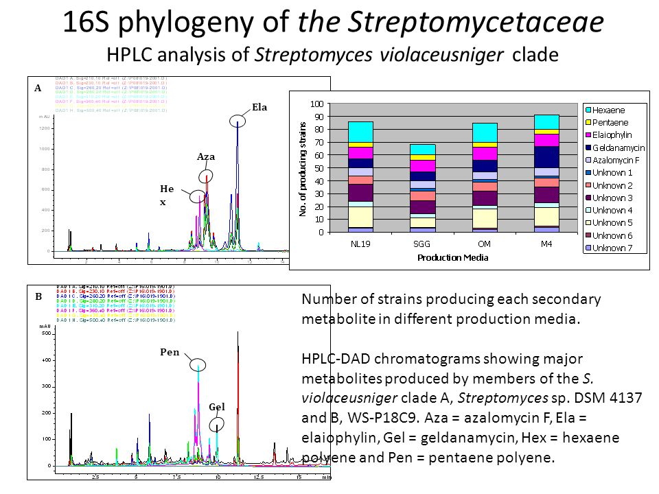 16S phylogeny of the Streptomycetaceae HPLC analysis of Streptomyces violaceusniger clade Aza He x Ela A Gel Pen B Number of strains producing each secondary metabolite in different production media.