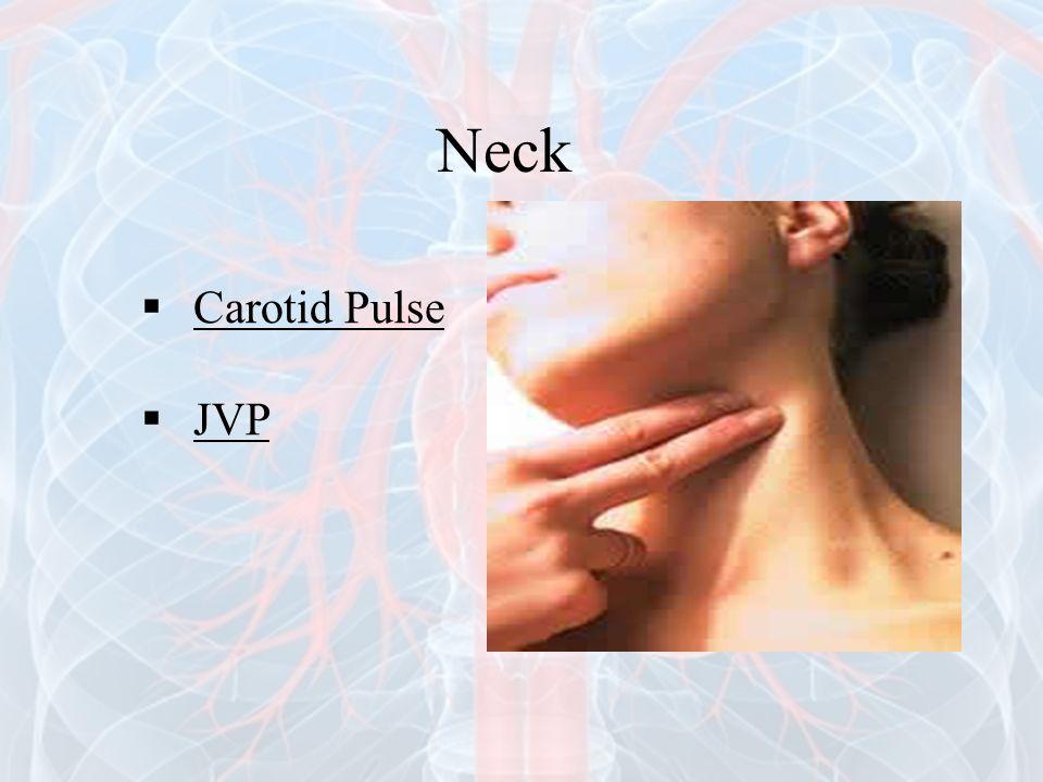 Neck  Carotid Pulse  JVP