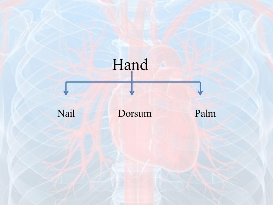 Hand Nail Dorsum Palm