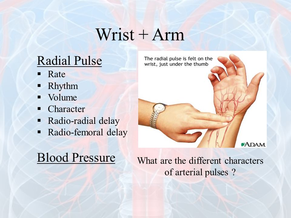 Wrist + Arm Radial Pulse  Rate  Rhythm  Volume  Character  Radio-radial delay  Radio-femoral delay Blood Pressure What are the different charact