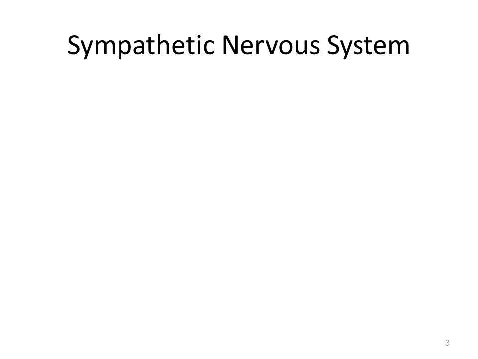 Sympathetic Nervous System 3