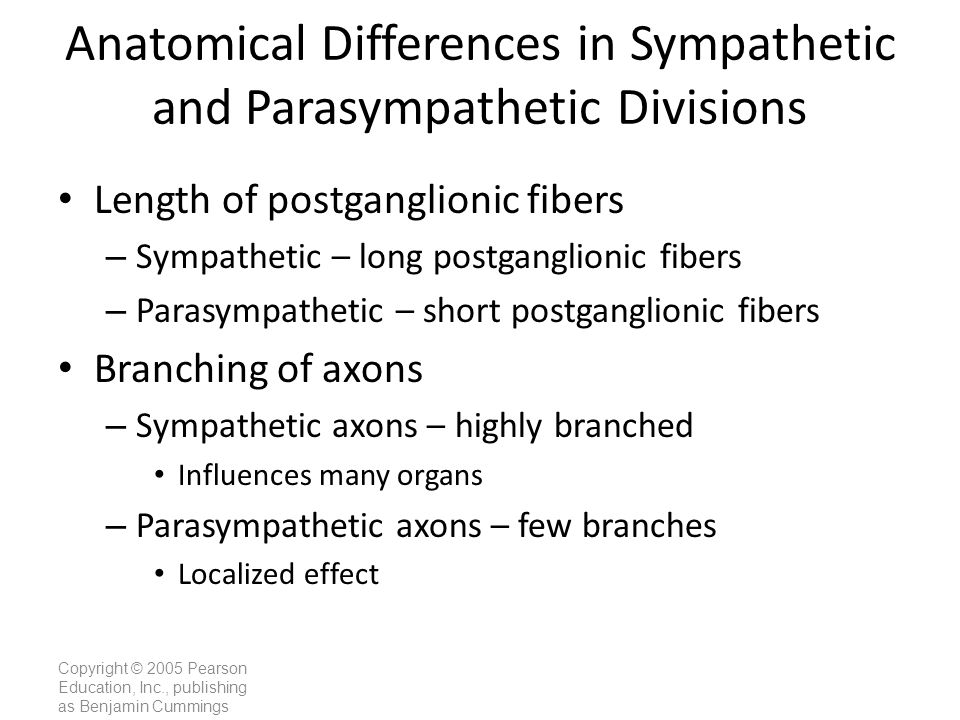 Copyright © 2005 Pearson Education, Inc., publishing as Benjamin Cummings Anatomical Differences in Sympathetic and Parasympathetic Divisions Length o