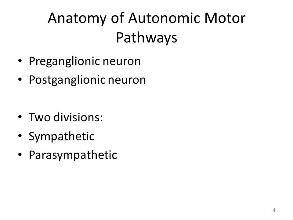Anatomy of Autonomic Motor Pathways Preganglionic neuron Postganglionic neuron Two divisions: Sympathetic Parasympathetic 4