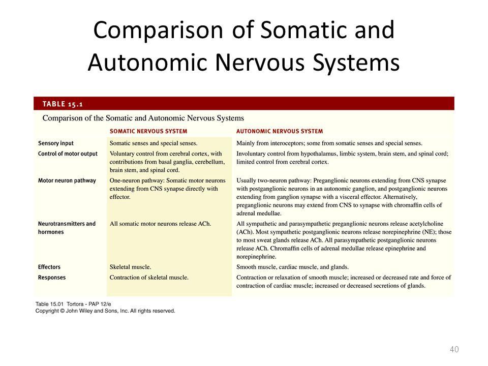 Comparison of Somatic and Autonomic Nervous Systems 40